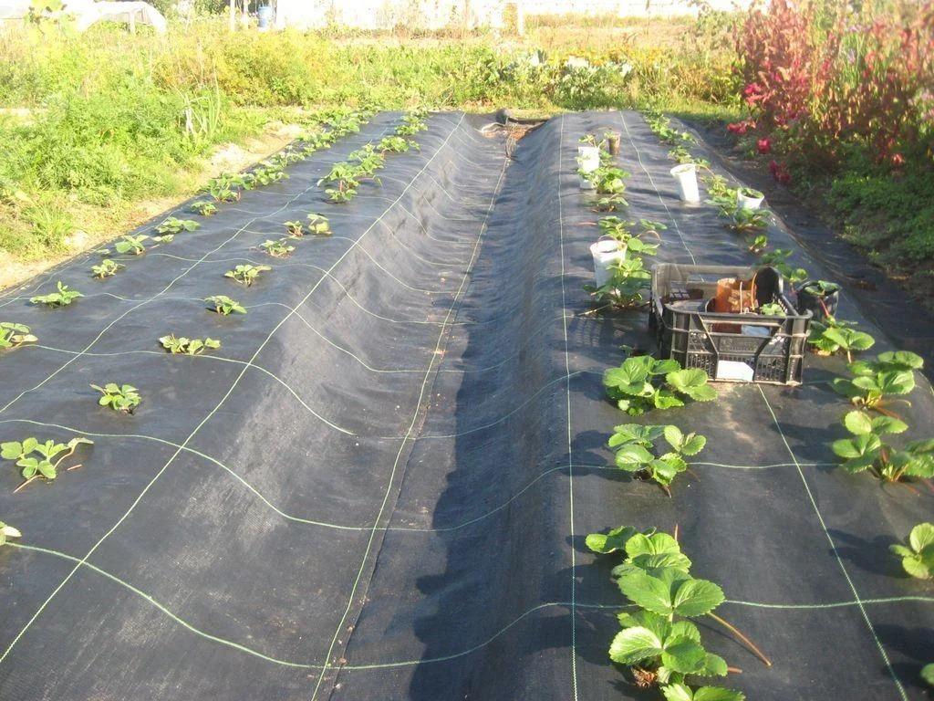 геотекстиль для огорода