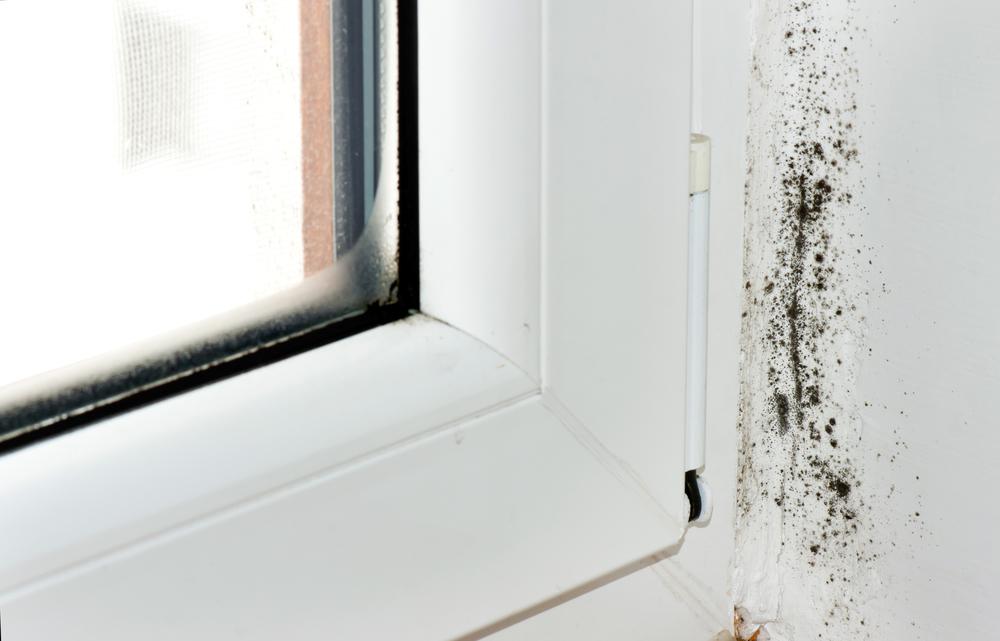 конденсат на окнах причина плесени