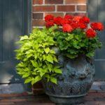 садовые вазоны для цветов идеи декора
