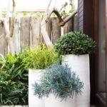 садовые вазоны для цветов виды