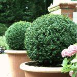 садовые вазоны для цветов виды оформления
