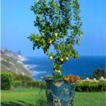садовые вазоны для цветов варианты декора