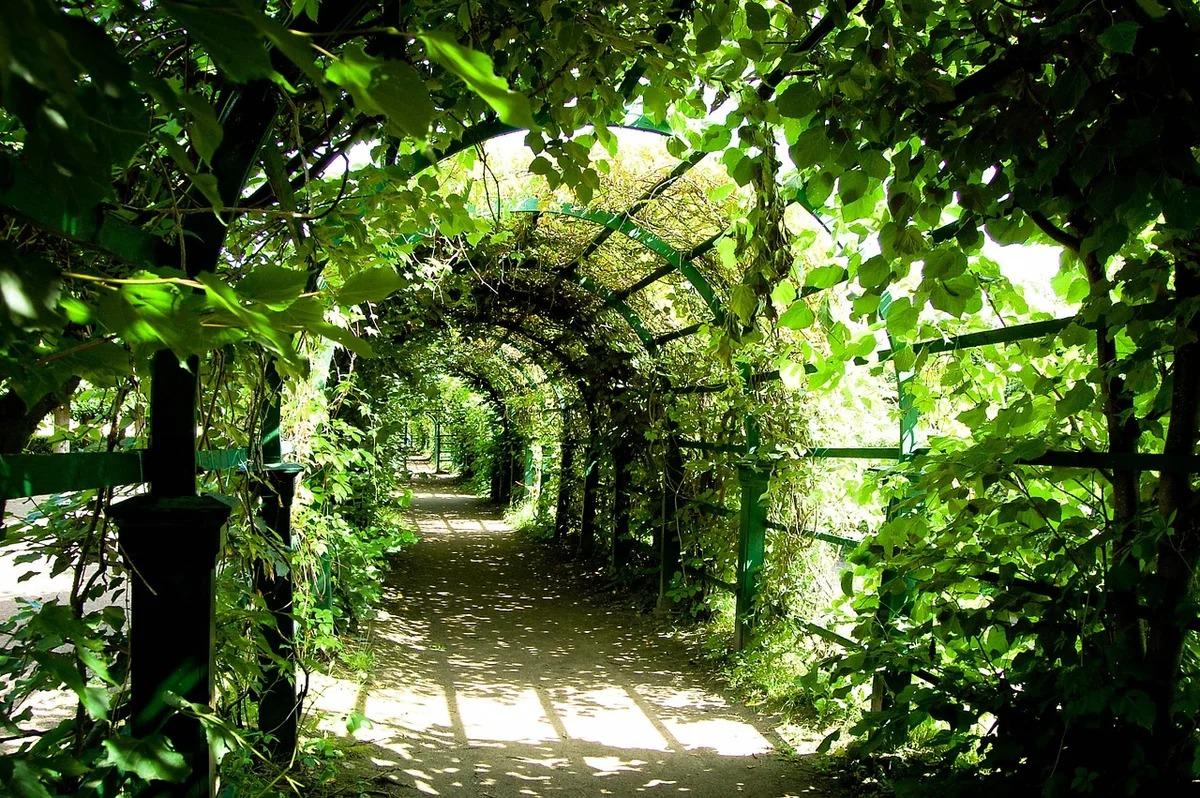 Зеленые галереи «берсо»
