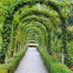 вертикальное озеленение в саду дизайн идеи