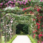 вертикальное озеленение в саду идеи дизайн