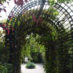вертикальное озеленение в саду идеи дизайна