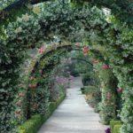 вертикальное озеленение в саду декор