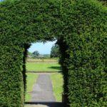 вертикальное озеленение в саду декор фото