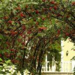 вертикальное озеленение в саду фото декор