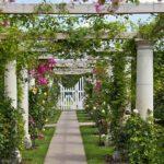 вертикальное озеленение в саду фото декора