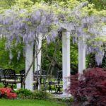 вертикальное озеленение в саду идеи декора