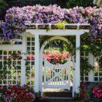 вертикальное озеленение в саду идеи оформление