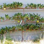 вертикальное озеленение в саду идеи оформления