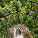 вертикальное озеленение в саду варианты