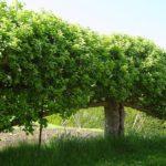 вертикальное озеленение в саду варианты фото