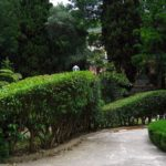вертикальное озеленение в саду фото варианты