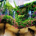 вертикальное озеленение в саду идеи