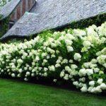вертикальное озеленение в саду фото вариантов