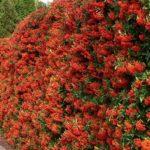 вертикальное озеленение в саду варианты идеи