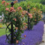 вертикальное озеленение в саду идеи варианты