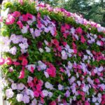 вертикальное озеленение в саду идеи вариантов
