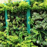 вертикальное озеленение в саду виды