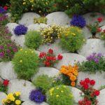 вертикальное озеленение в саду виды фото