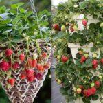 вертикальное озеленение в саду фото виды