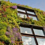 вертикальное озеленение в саду виды идеи