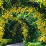вертикальное озеленение в саду идеи виды