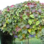 вертикальное озеленение в саду идеи фото