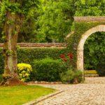 вертикальное озеленение в саду обзор