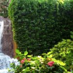 вертикальное озеленение в саду виды дизайна