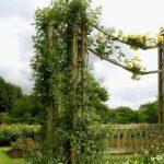 вертикальное озеленение в саду виды декора