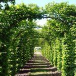 вертикальное озеленение в саду виды оформления