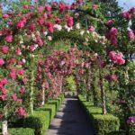 вертикальное озеленение в саду варианты декора