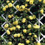 вертикальное озеленение в саду варианты оформления