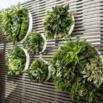 вертикальное озеленение в саду обзор идеи