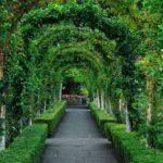 вертикальное озеленение в саду фото идеи