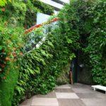 вертикальное озеленение в саду дизайн