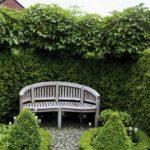 вертикальное озеленение в саду фото дизайн