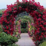 вертикальное озеленение в саду фото дизайна